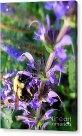 Bumble Bee On Flower Acrylic Print by Renee Trenholm