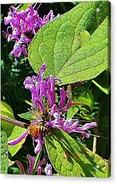 Bumbling Flora Acrylic Print