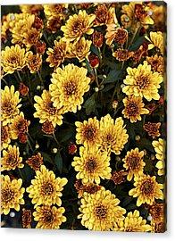 Bunch Of Flowers Acrylic Print by Malania Hammer