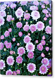 Bunch Of Pink Acrylic Print by Malania Hammer