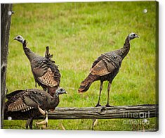 Acrylic Print featuring the photograph Bunch Of Turkeys by Cheryl Baxter
