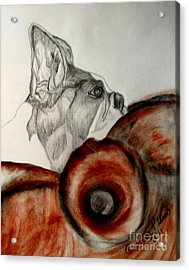 Acrylic Print featuring the drawing Bundled In Blankets by Maria Urso