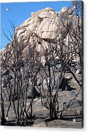 Burned Forest 3 Acrylic Print by Naxart Studio