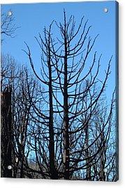 Burned Trees 2 Acrylic Print by Naxart Studio