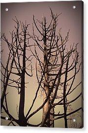 Burned Trees 3 Acrylic Print