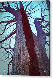Burned Trees 8 Acrylic Print