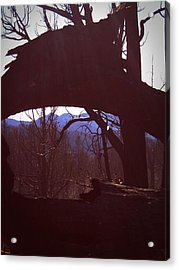 Burned Trees 9 Acrylic Print