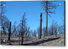 Burned Trees In California Acrylic Print by Naxart Studio