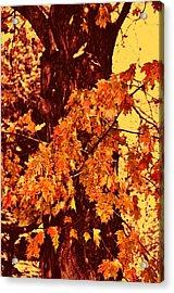 Burnt Sienna Acrylic Print by JAMART Photography