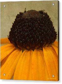 Burr Berry Acrylic Print by Ed Smith