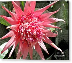 Acrylic Print featuring the photograph Burst Of Pink by Beth Saffer