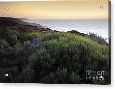 Bush At Twilight Acrylic Print by Roberto Bettacchi