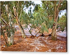 Bush Flood Acrylic Print