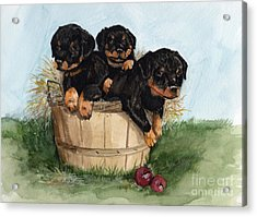 Acrylic Print featuring the painting Bushel Of Rotty Pups  by Nancy Patterson