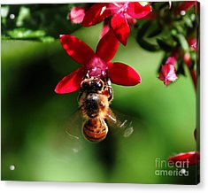 Busy As A Bee Acrylic Print