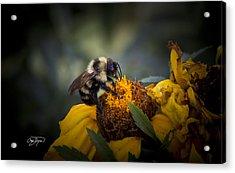 Busy Bee - Macro Lens Detail - Artist Cris Hayes Acrylic Print by Cris Hayes