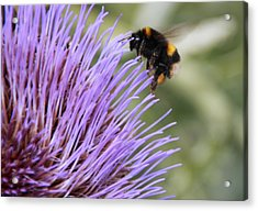 Busy Bee Acrylic Print by Karen Grist