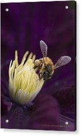 Busy Bee Acrylic Print by Kelvin Andow