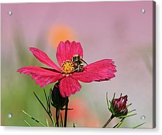 Busy Bee Acrylic Print by Ronald Lafleur