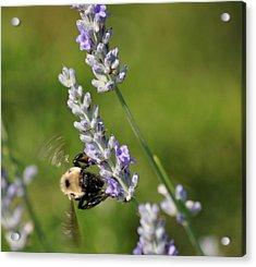 Busy Bee Acrylic Print by Terri Albertson