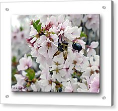 Busy Bees Acrylic Print by Brian Wallace