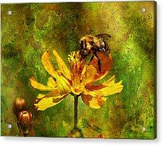 Busy Busy Honey Bee Acrylic Print