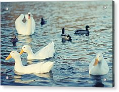 Busy Pond Acrylic Print by Andrey Kopot