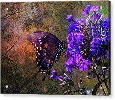 Busy Spicebush Butterfly Acrylic Print