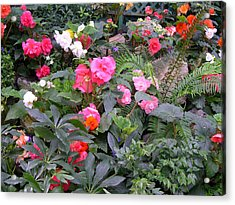 Acrylic Print featuring the digital art Butchart Begonia Garden by Claude McCoy