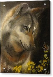 Butter-wolf Acrylic Print