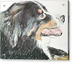 Acrylic Print featuring the drawing Buttercup The Wonderdog by Beth Saffer