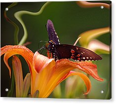 Butterflies Are Free... Acrylic Print by Arthur Miller