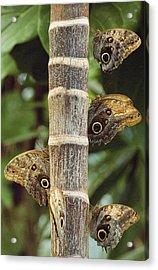 Butterflies Acrylic Print by Bilderbuch