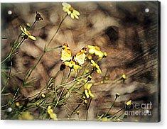 Butterflies Acrylic Print by Nicky Dou