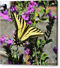 Butterfly 2 Acrylic Print