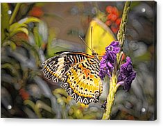 Butterfly 3 Acrylic Print by Nathan Firebaugh