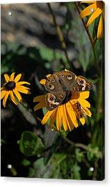 Butterfly 90 Acrylic Print by Joyce StJames