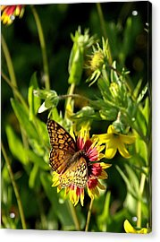 Butterfly And Blankets I Acrylic Print by James Granberry