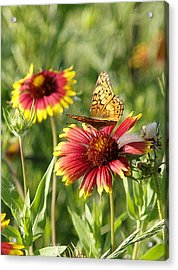 Butterfly And Blankets IIi Acrylic Print by James Granberry