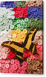 Butterfly And Buttons Acrylic Print by Garry Gay