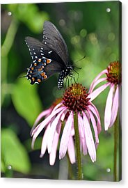 Butterfly And Coine Flower Acrylic Print by Marty Koch