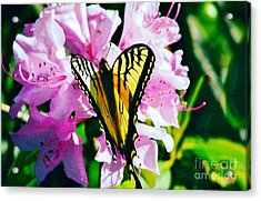 Butterfly And Rhododenren Acrylic Print by Judy Via-Wolff