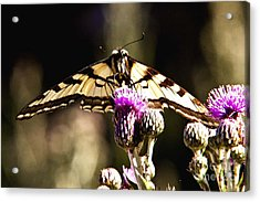 Butterfly And Thistle Acrylic Print by Angelique Olin