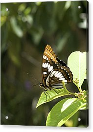 Acrylic Print featuring the photograph Butterfly At Rest by Betty Depee
