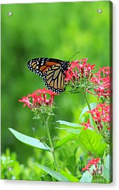 Acrylic Print featuring the photograph Butterfly Beauty by Laurinda Bowling