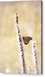 Butterfly Acrylic Print by Bill Martin