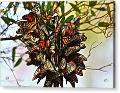 Butterfly Bouquet Acrylic Print