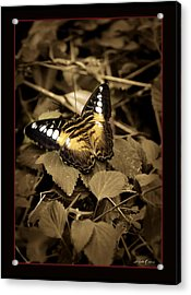 Butterfly Brown Acrylic Print by Linda Olsen