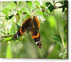 Butterfly Buds Acrylic Print