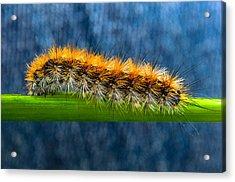 Butterfly Caterpillar Larva On The Stem Acrylic Print